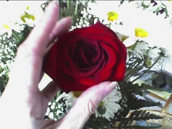 Lorraine -Rosed Hands +